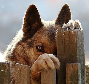 Нажмите на изображение для увеличения Название: Душевный пёс.jpg Просмотров: 0 Размер:53.9 Кб ID:1382263